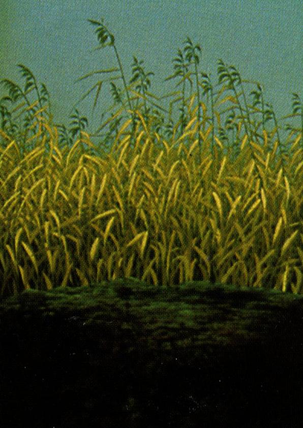 Omslagsbild Träd Gräs Stenar